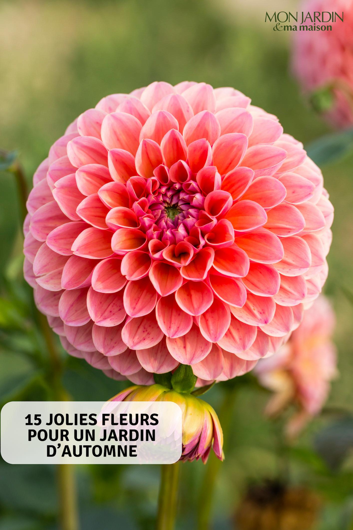15 jolies fleurs pour un jardin d\'automne | Automne | Flowers ...