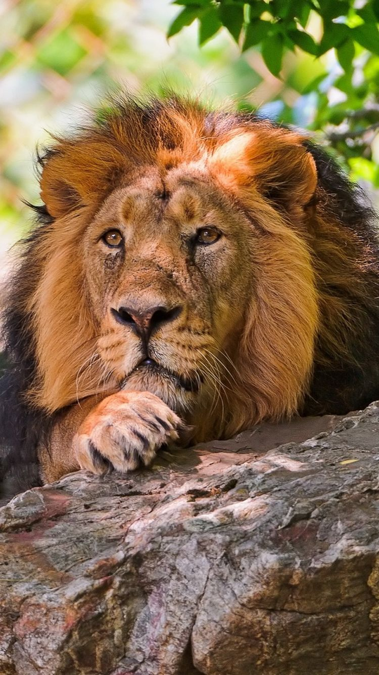10 Wild Animals Wallpapers for the iPhone 6! Animal