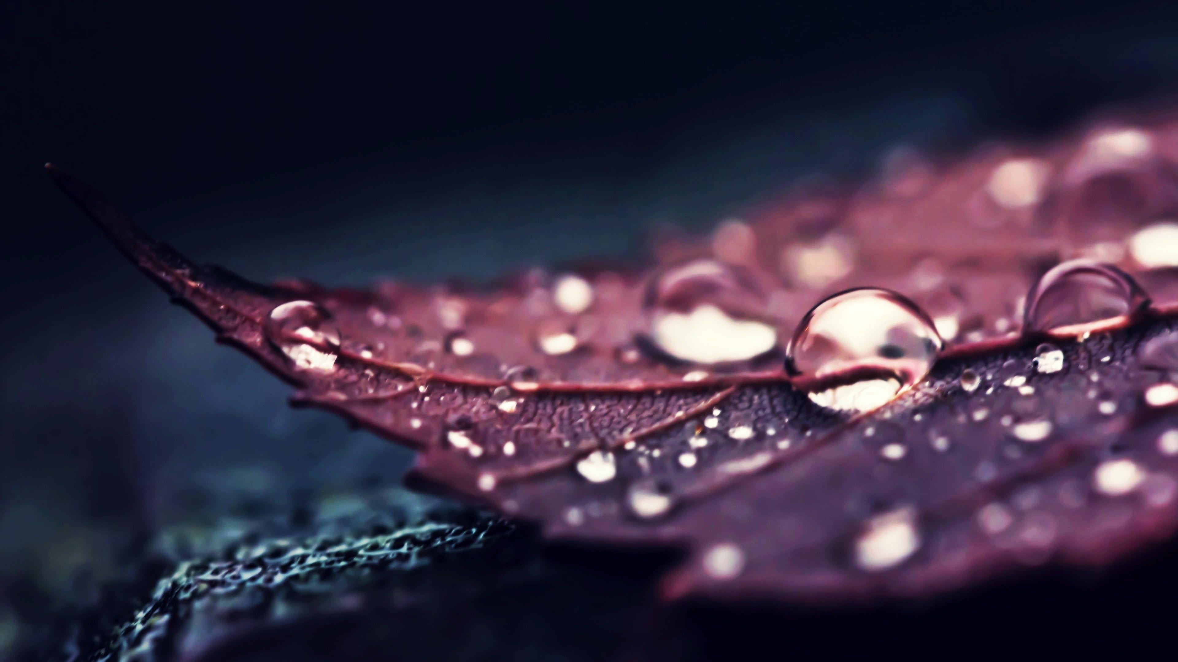 Brown Leaf Nature Leaves Water Macro Water Drops Plants 4k Wallpaper Hdwallpaper Desktop In 2020 Hd Wallpapers For Pc Hd Wallpaper Desktop Wallpaper