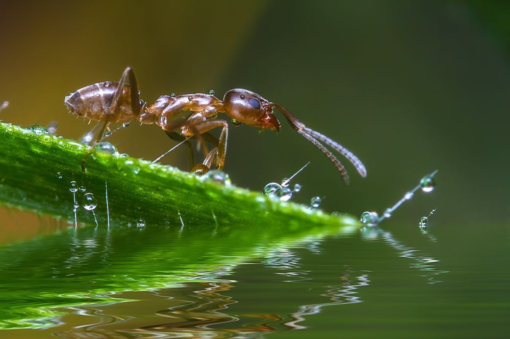 Little Ant Photo by Jorge Arce — National Geographic Your Shot