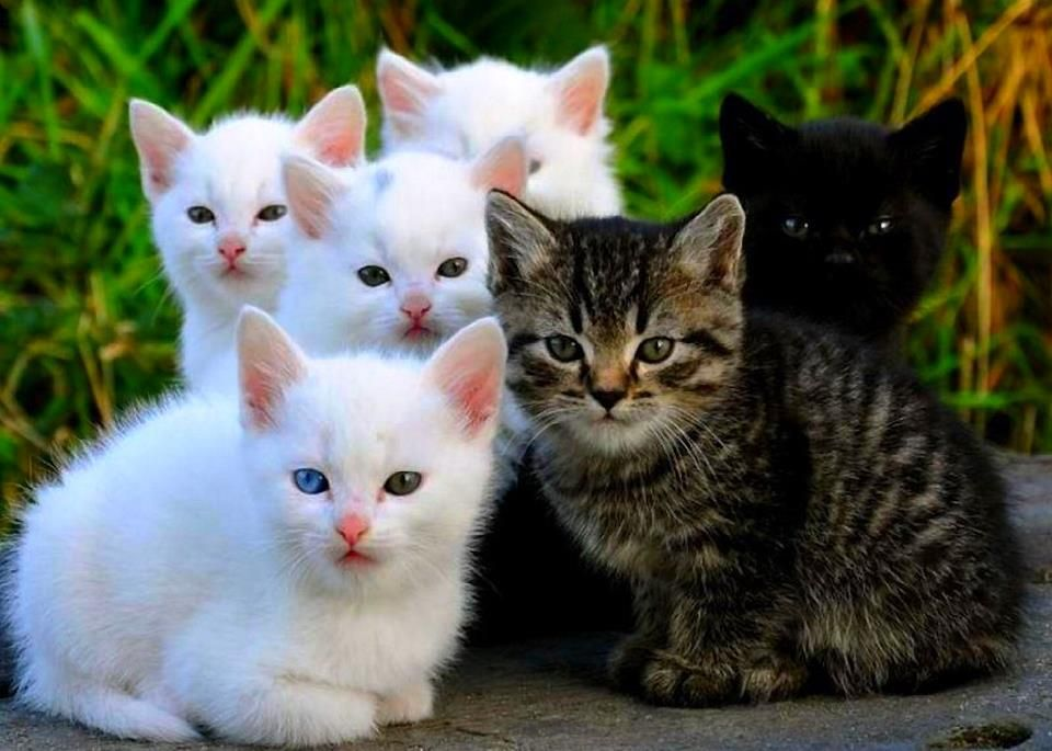 What A Precious Group Never Seen So Many White Kittens Together