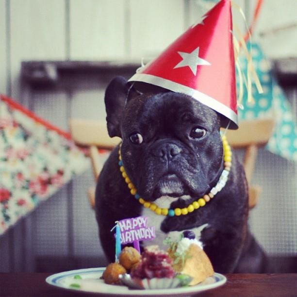 Happy Birthday Frenchie French Bulldog Animal Birthday Dog Party