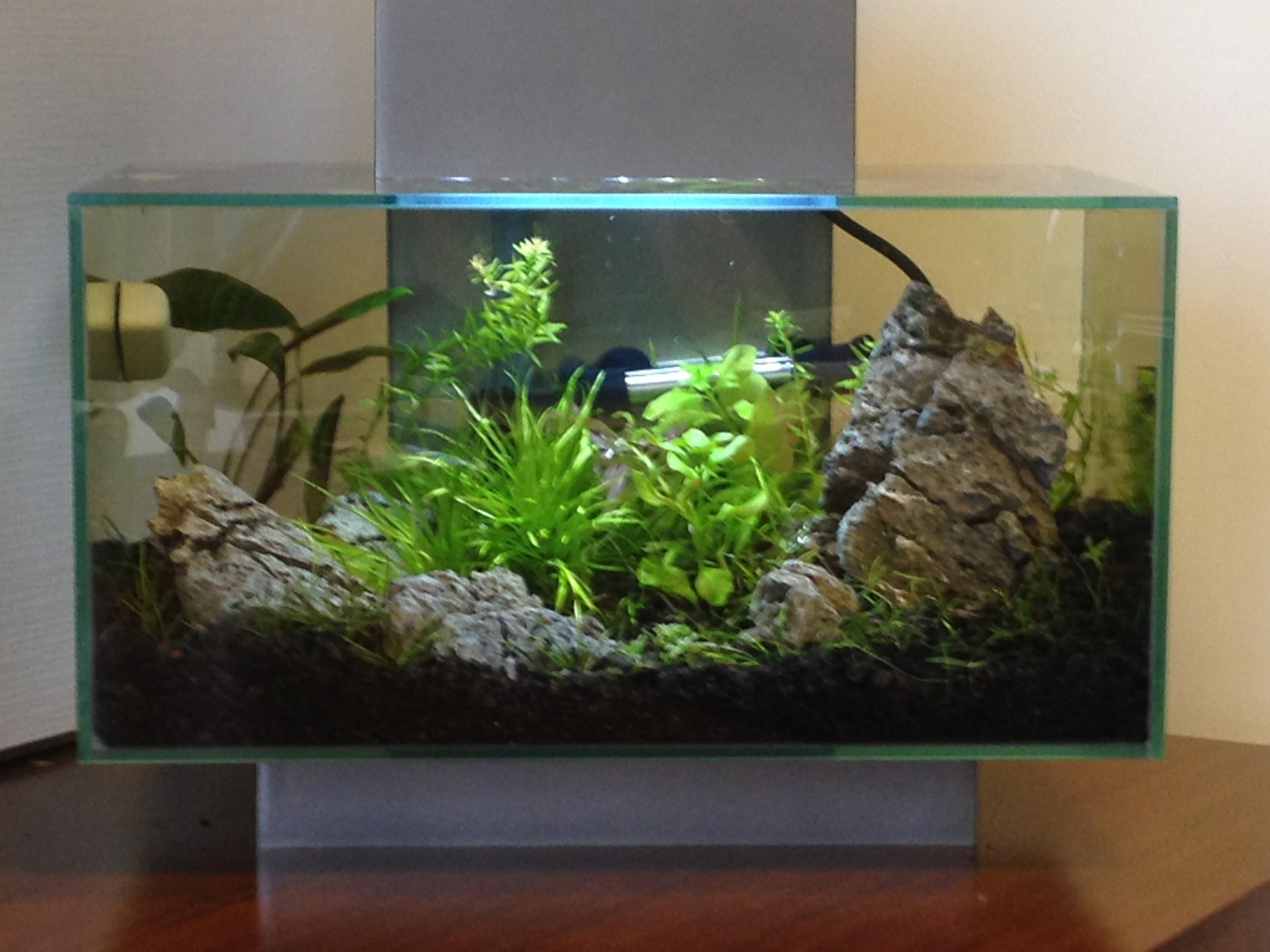 Aquascape Ideas Fluval Aquascape Plants