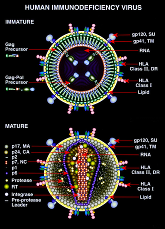 medicamentos para el vih sida wikipedia