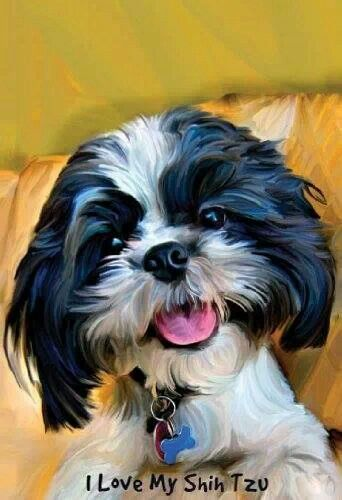 Love my shih tzu | All about Lucy! | Shih tzu, Dogs, Dog ...