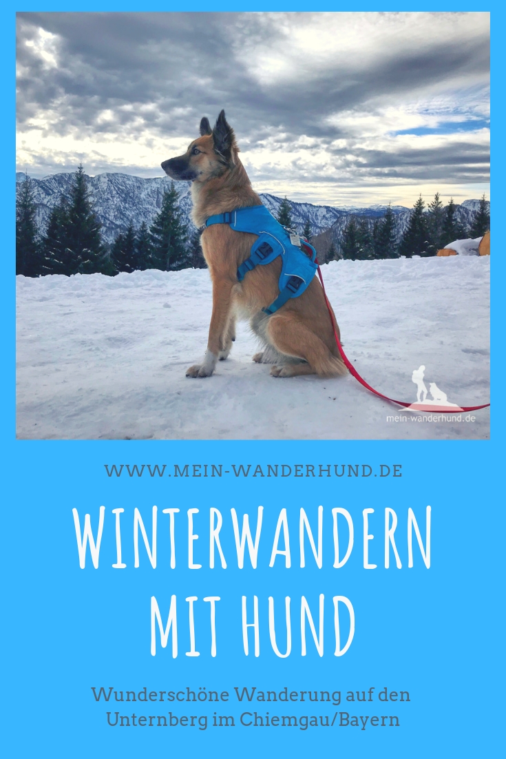 Winterwanderung Am Unternberg Am Skitourenlehrpfad Zum Gipfel Wanderurlaub Mit Hund Hunde Wanderung