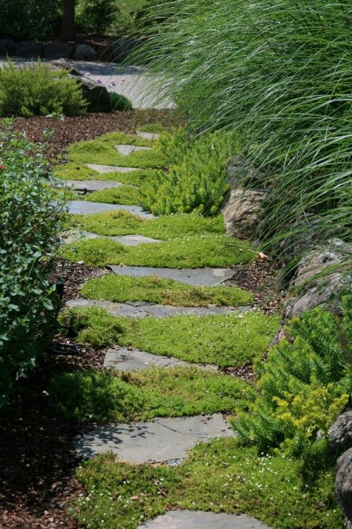 begehbarer Bodendecker statt gras zwischen die Trittsteine am Beet - trittplatten selber machen