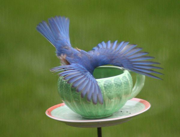 """Whaddya got in here?"" Bluebird by Birds & Blooms reader Renee Baumgartner."