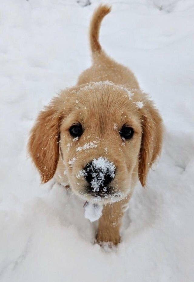 Süße niedlich | Welpe | Hund | Tier | Haustiere - Ceren - #Ceren #Haustiere #...