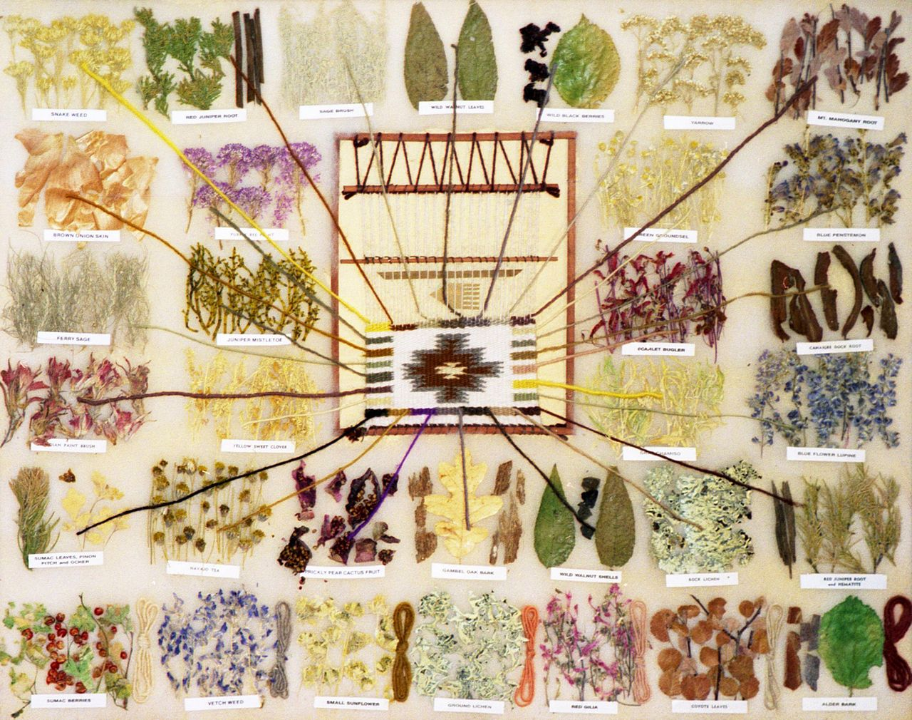 Navajo natural dyes crafts how to dye make your own for The art and craft of natural dyeing