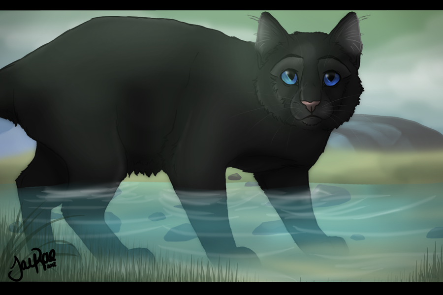 Reedwhisker of RiverClan Warrior cats, Warrior cats