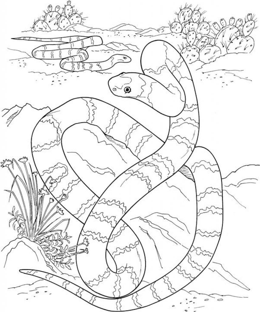 Realistic snakes in a dessert coloring picture kids printable