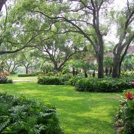 St Augustine Lawn In Filtered Shade In Jacksonville Fl Shade Landscaping Landscape Design Front Yard Landscaping