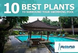 pool landscaping ideas 10 best plants to surround your swimming pool