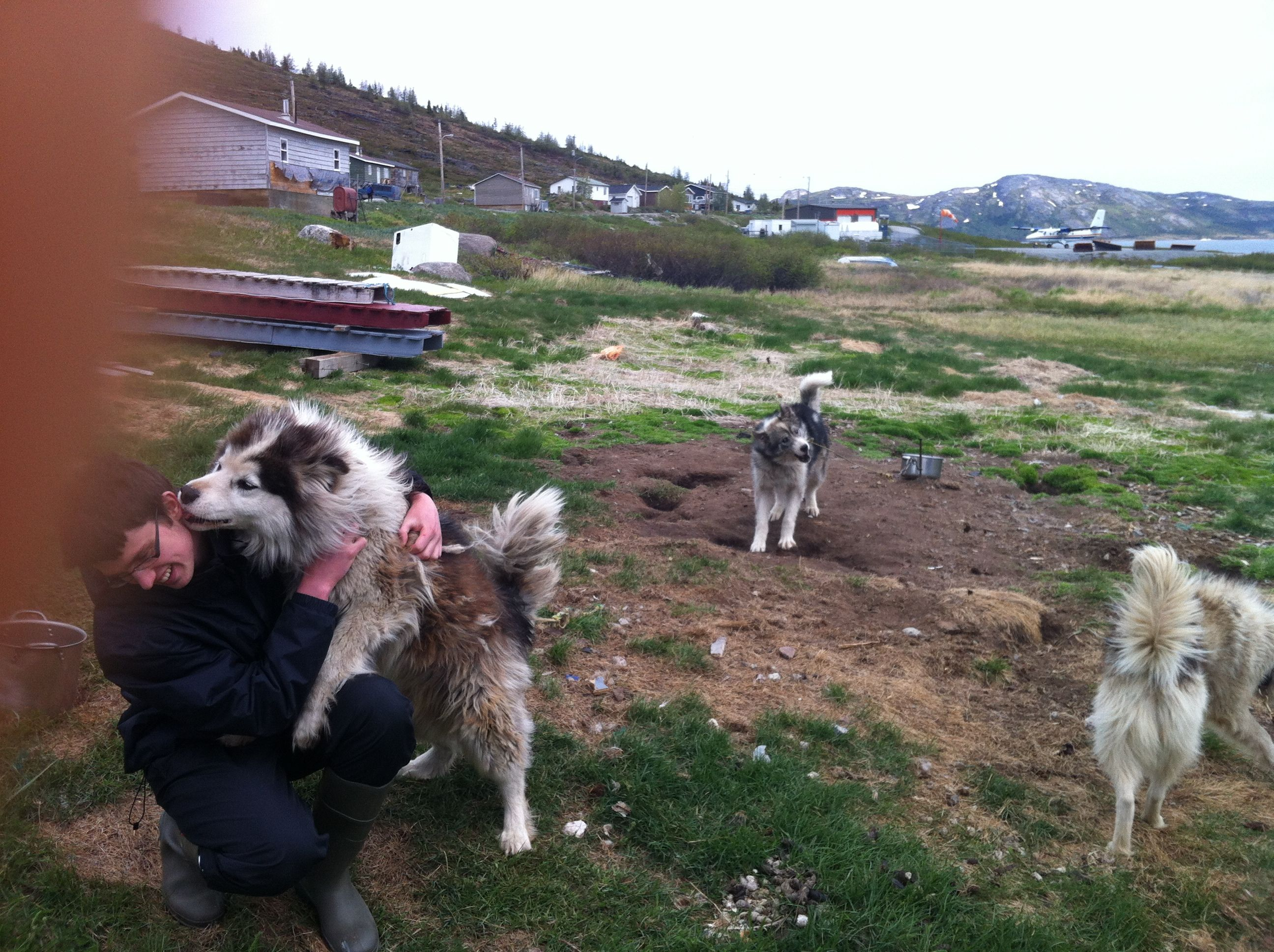 Meeting the sled dogs on my trip to Nain, Newfoundland and