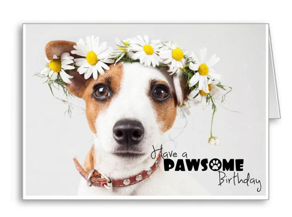 Greetings Cards Happy Birthday Dogs Jack By Thelazycatstudio