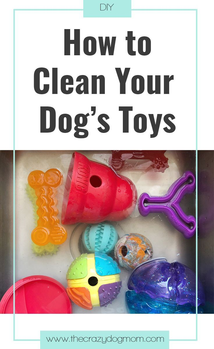 Toys and me images  How to Clean Your Dogus Toys  Cody u Porter  Pinterest  Toy Dog