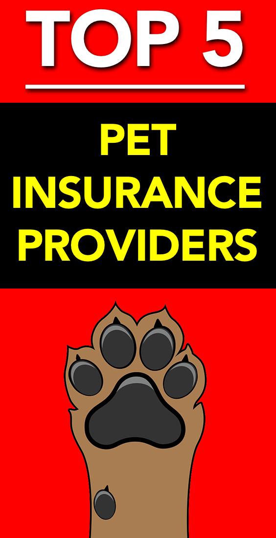 Top 5 Pet Insurance Providers Dog Insurance Best Pet Insurance
