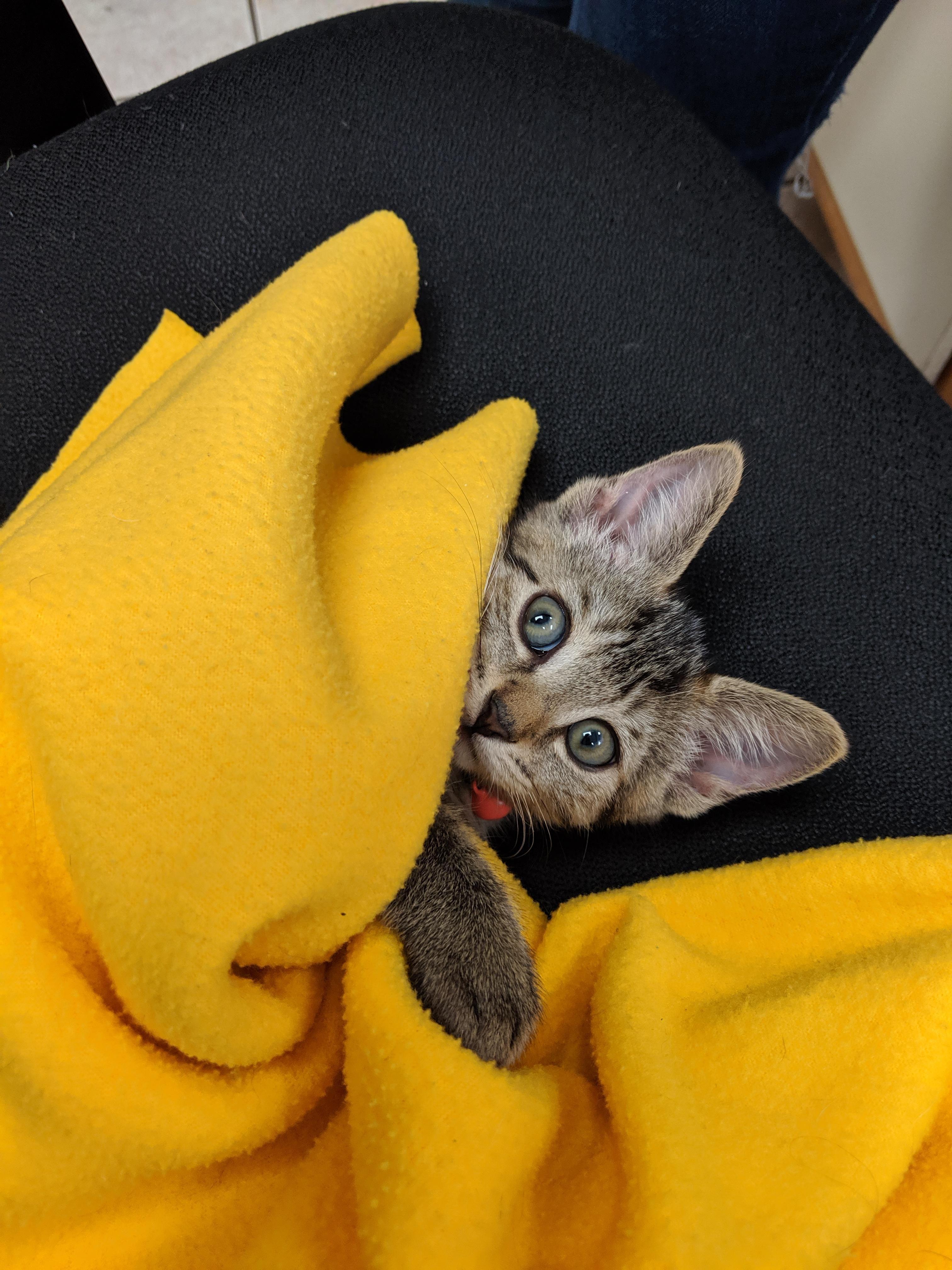Best coworker ever https//ift.tt/2Nrt84n Cat pictures