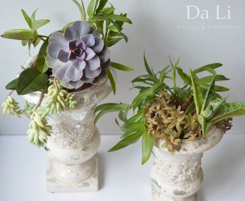 pot plants, indoor plants, succulents, plants decoration | indoor ...