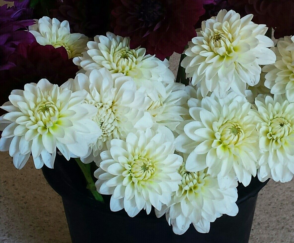 Pin By South County Flowers On Diy Flower Buckets Pinterest