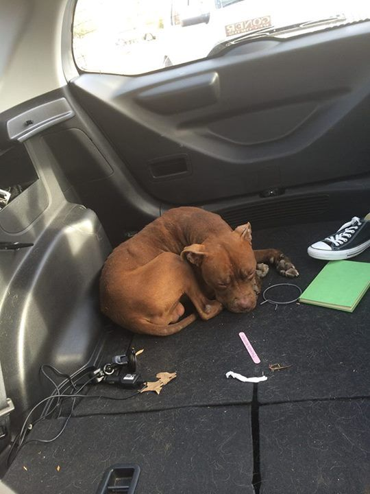 So I was driving home from work and saw some piece of shit asshat push this dog out of their car. I pulled over to see if he was okay and he hopped up in my car and laid down. I can't have another animal but I didn't want to just leave him out there. I'm gonna take him to work and have him neutered and vaccinated. He's limping on one leg, don't know if it's from being pushed out of a moving car or if it's just old age. I'll fix him though. Plllleeeeease share this with anyone who might be…