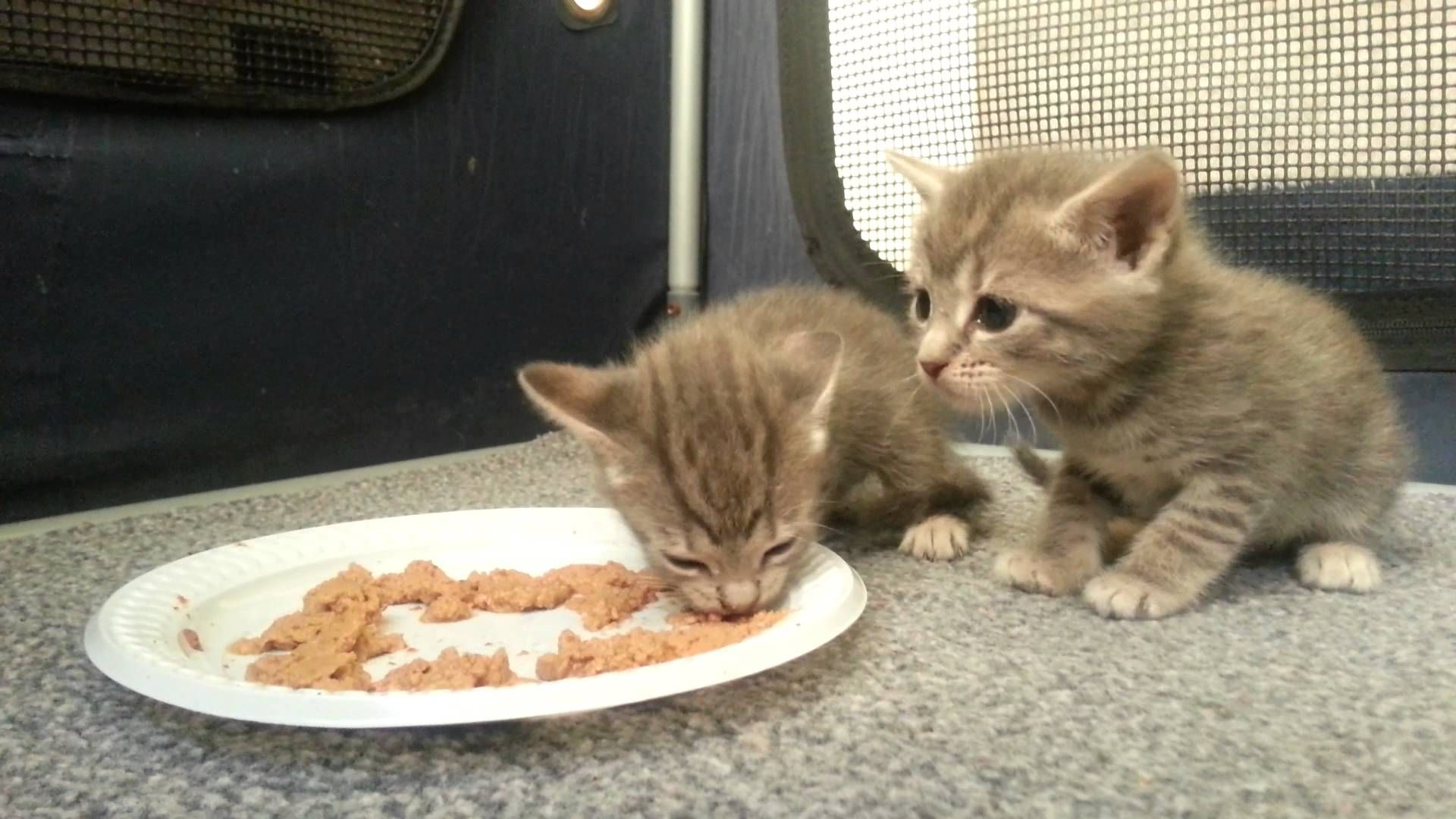 Nonetheless Is Oatmeal Good For Pet Cats As Well Can Cats Also