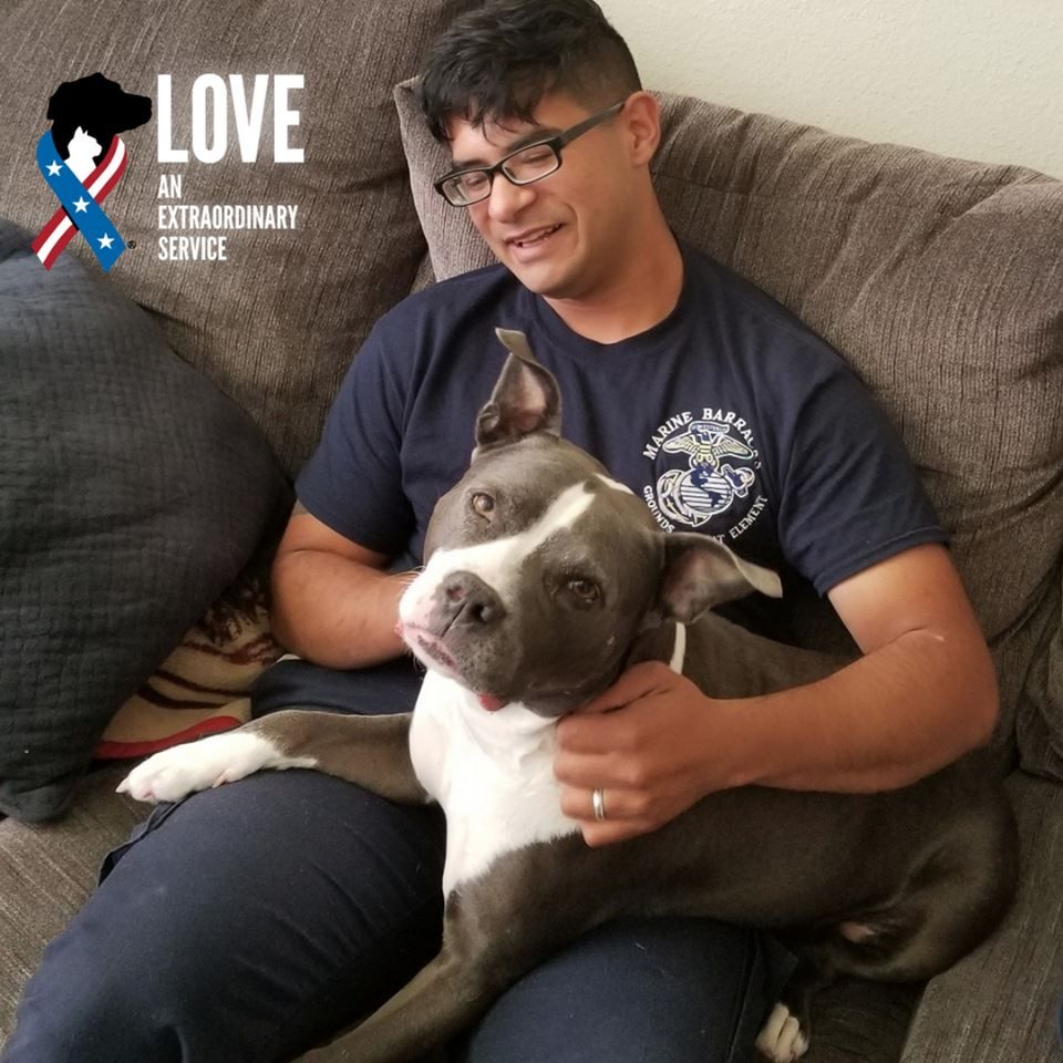 Stunning 3 Year Old Kali Adopted A Marine Thanks To Daniel For His Service And For Giving This Girl A Second Cha Animal Welfare League Pets Animal Companions