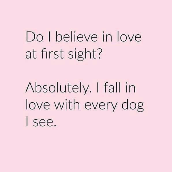 Love at first sight dog quote Google Search Funnies Pinterest Impressive Quotes About Love At First Site