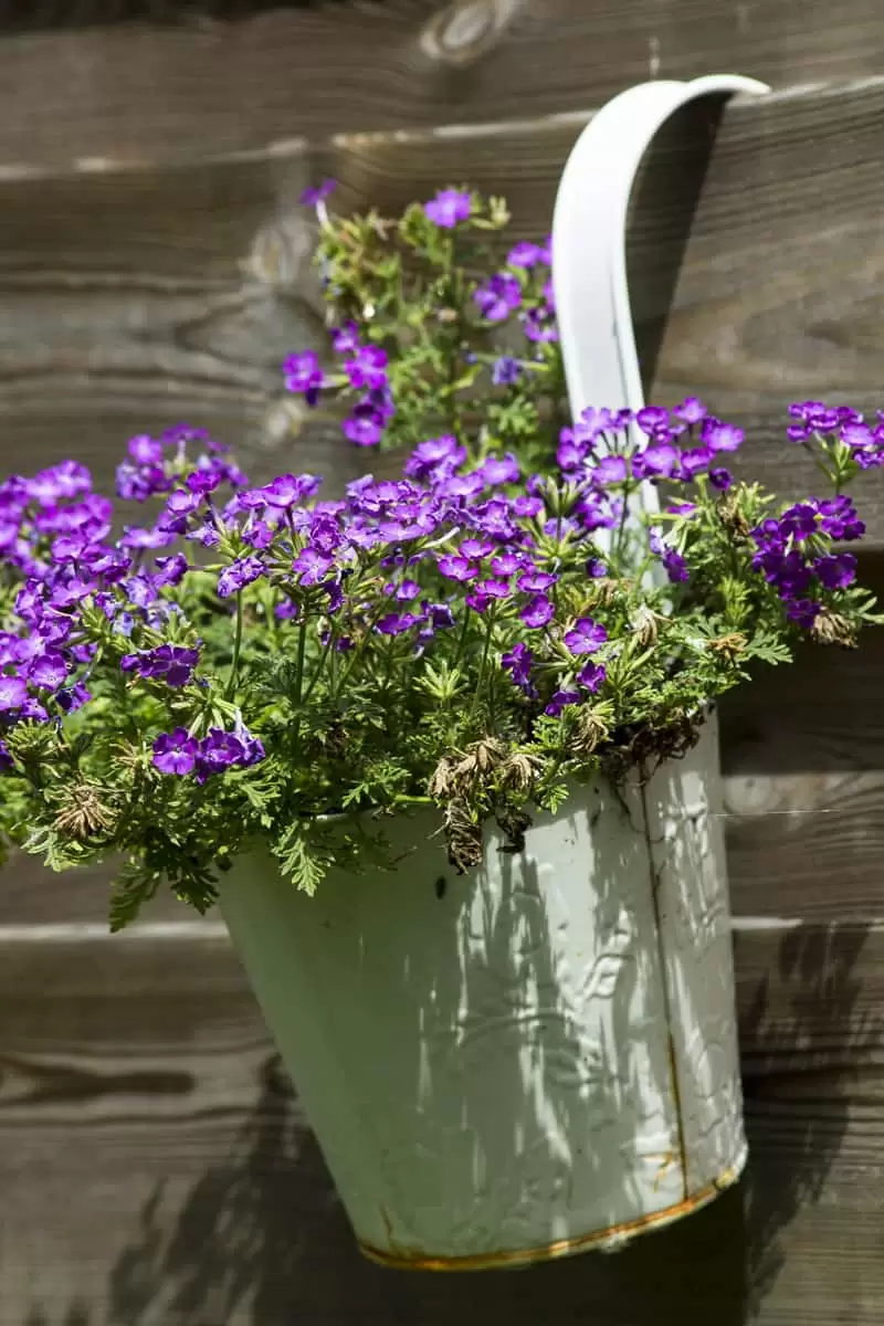 Container Gardening Ideas For Beginners Container