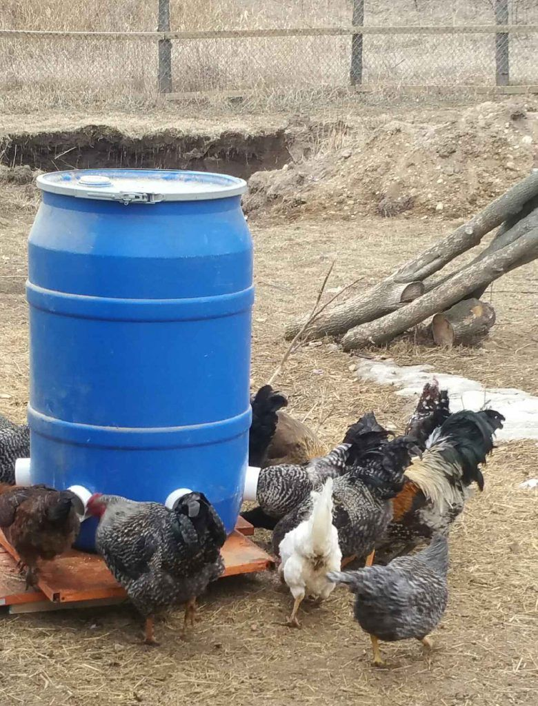 How to build an automatic chicken feeder backyard