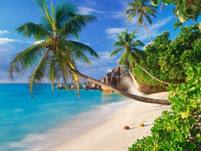 Many of these images are part of our free wallpaper and free screensavers tropical and - Free palm tree screensavers ...