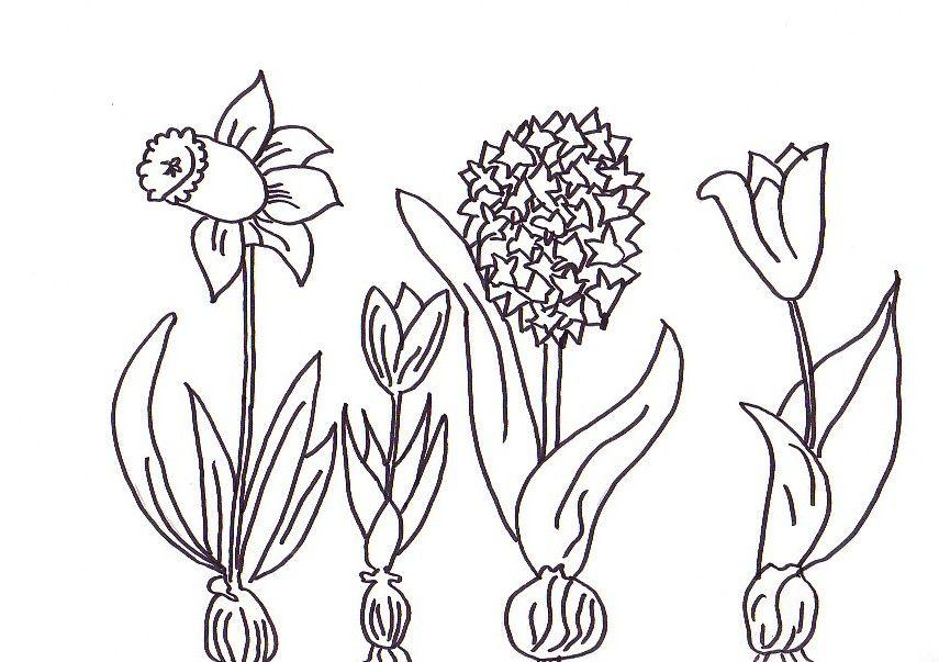 malvorlagen frühlingsblumen ausmalbilder #2007653