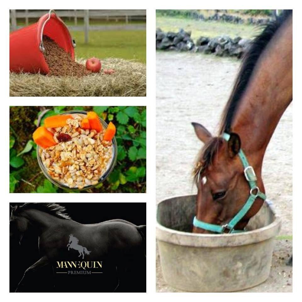 Muesli for your mannEQUIn - healthy horse - shiny coat! mannEQUIn - Jazdecké Potreby - Trencin www.mannequin.sk