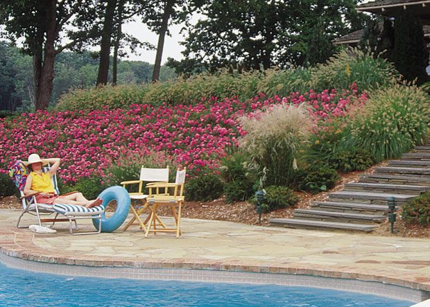 10 Easy Ways To Use Carpet Or Groundcover Roses In Your Landscape Flower Carpet Pink On Slope You Sloped Backyard Landscaping Sloped Backyard Sloped Garden