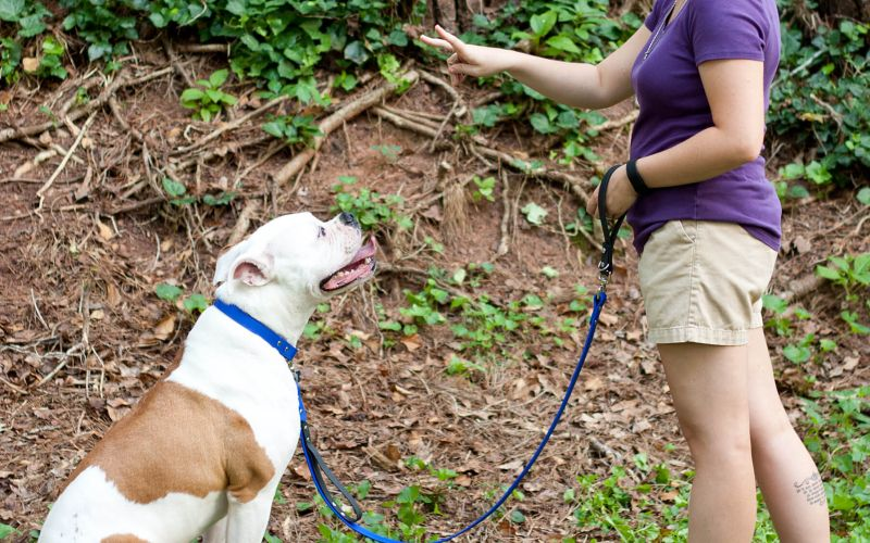 Dog Training Using Hand Signals Great For A Deaf Dog Puppy
