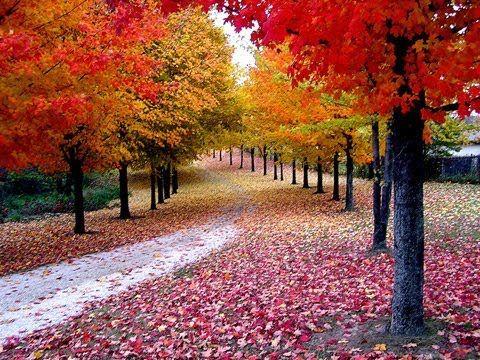 Otoño   Otoño, Paisajes otoño y Equinoccio de otoño