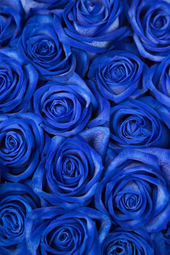 مقال عن خلفيات زرقاء جميلة 2020 التابع لـ خلفيات لتطبيق رفيق الذي يصلك بأكثر من 450 محل معتمد ف Blue Flower Wallpaper Blue Aesthetic Pastel Blue Aesthetic Dark