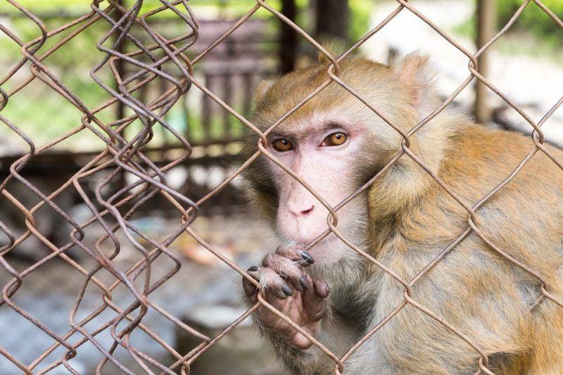 Affe Als Haustier Eine Gute Idee Affe Als Haustier Haustiere