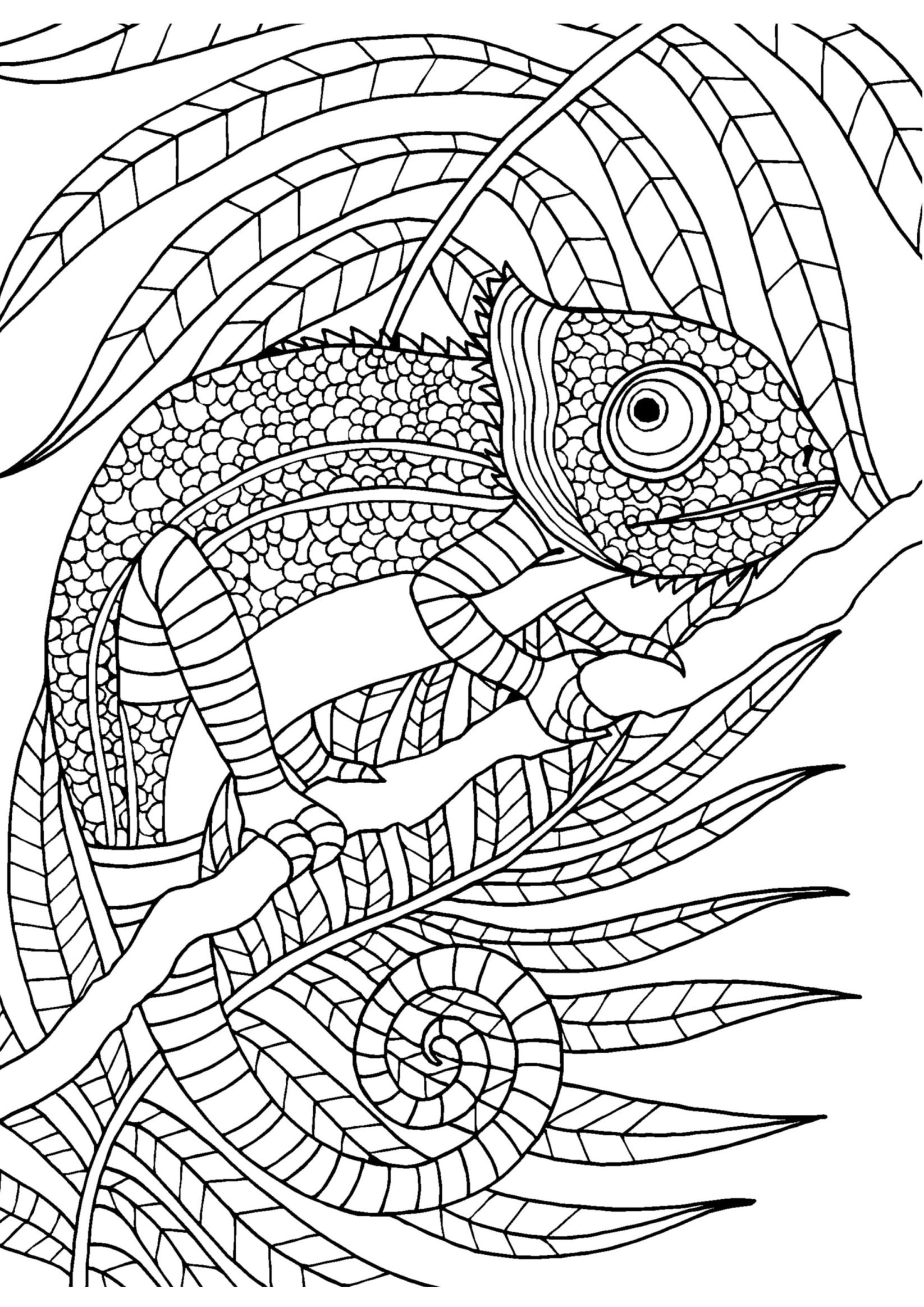 Chameleon adult colouring page