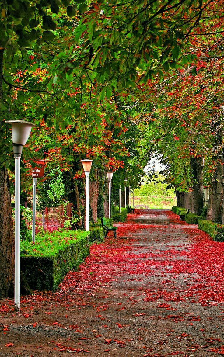 This Is The Best Hd Nature Wallpaper For Your Mobile Home Screen In This Colourful Wallpaper You Can See The Beautiful Road Green Trees And Red Flowers Which A In 2020