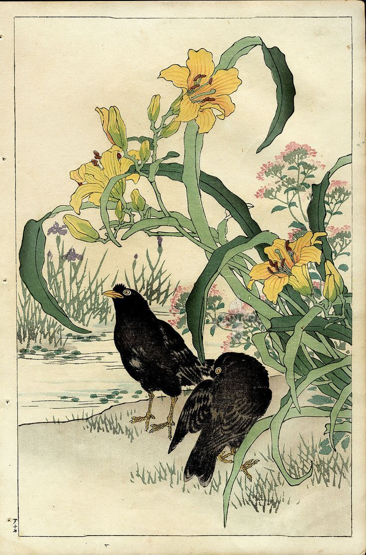 the birds and flowers of kono bairei | Crow, Lily. Bairei Flower and Bird Prints 1899.