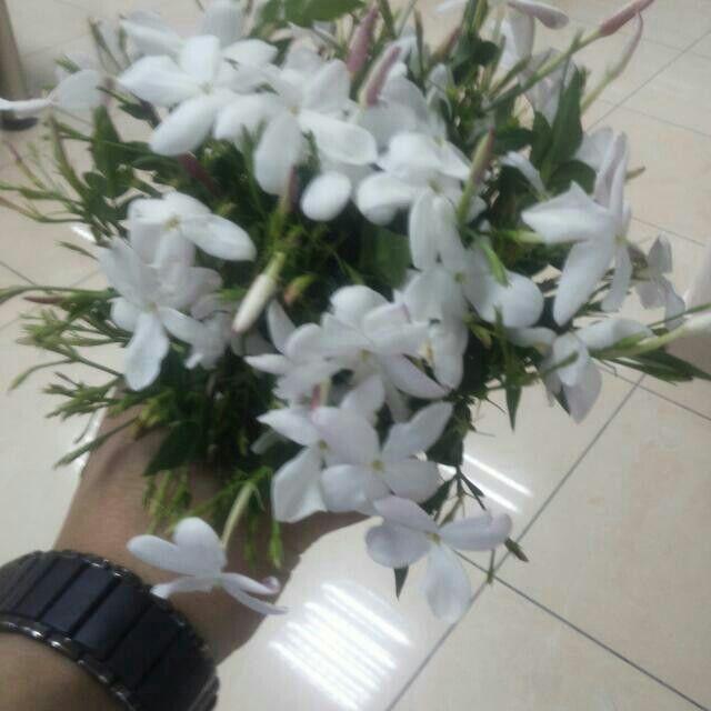 ياسمين شامي Special Flowers Flowers Plants