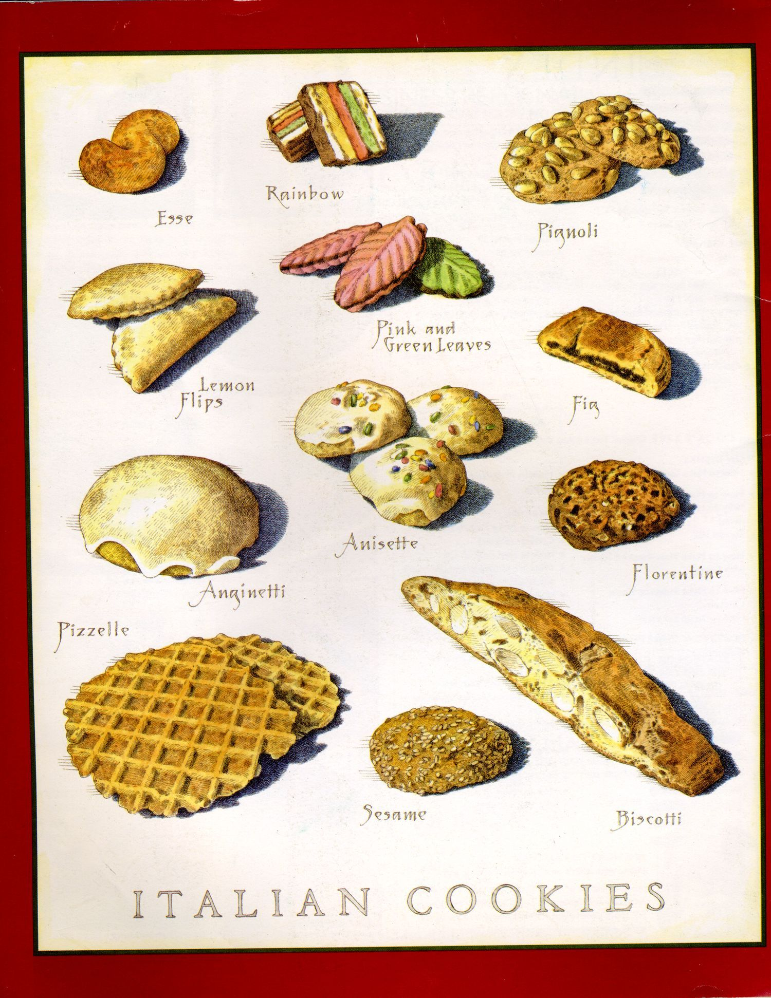 Cookus illustrated back cover art italian cookies