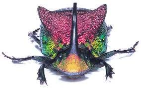 scarab beetles - Αναζήτηση Google