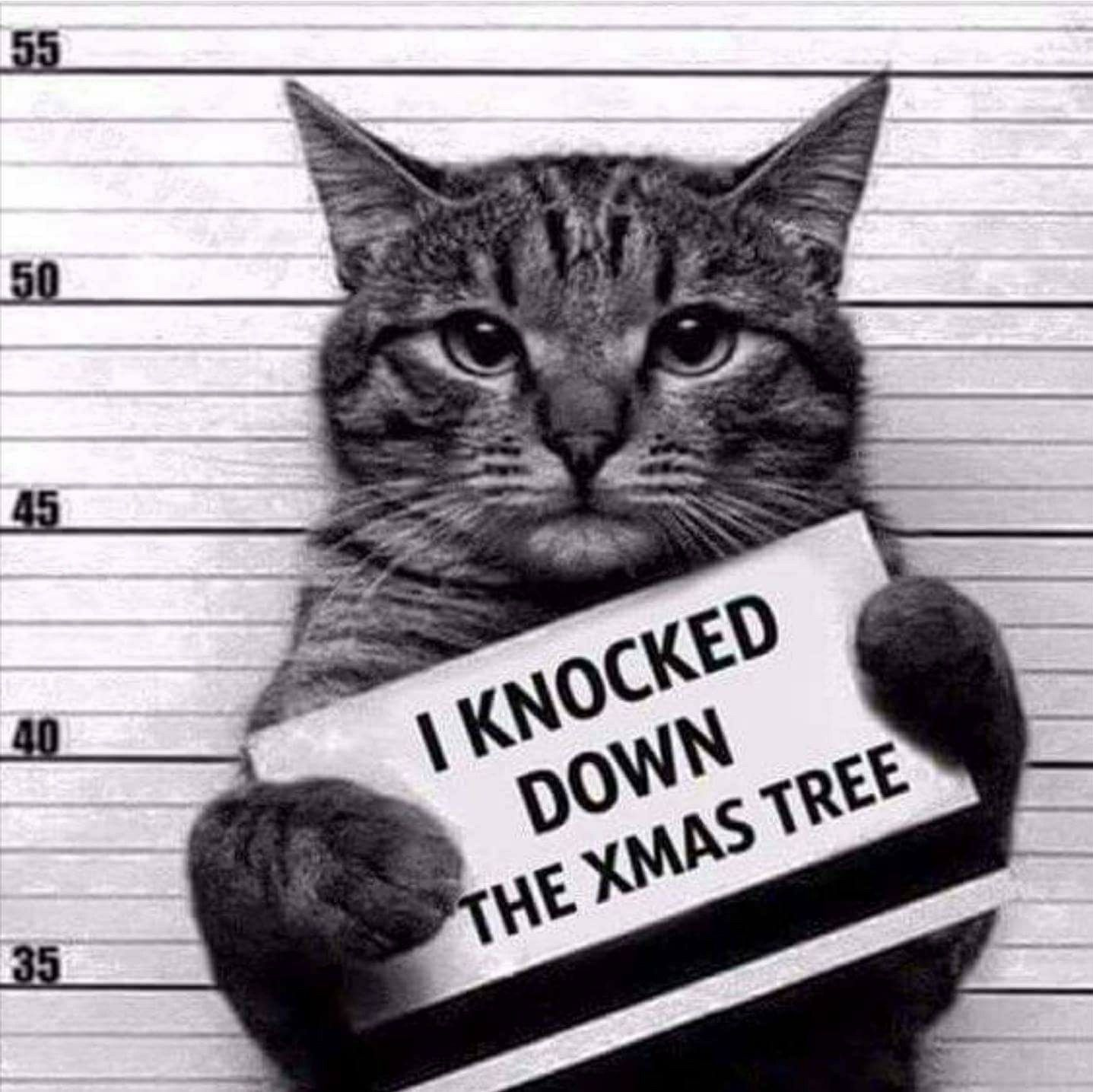 Image result for destroyed the christmas tree cat
