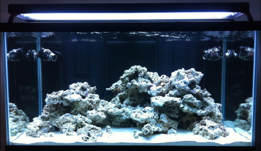 Aquascaping, Show Your Skills...   Page 26   Reef Central Online Community