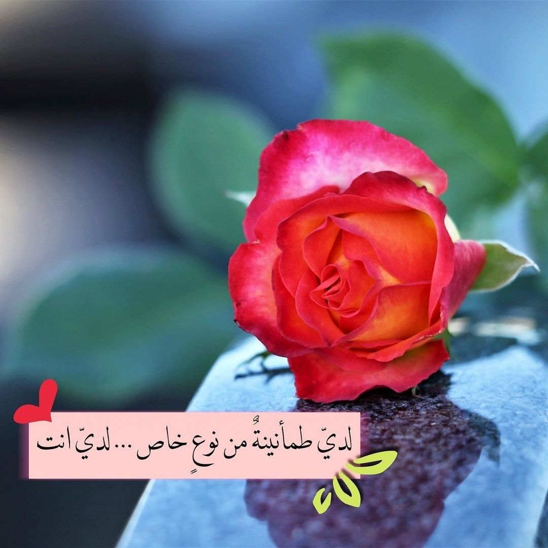 Pin By نسـ ـمـ ـآت آلفـ ـجر On Various Photos Flowers Rose Plants