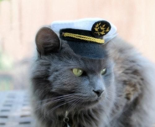 Got the hat, now I need a boat. https://plus.google.com/+CaptainJack63/posts/MGC1Bdu1NZa