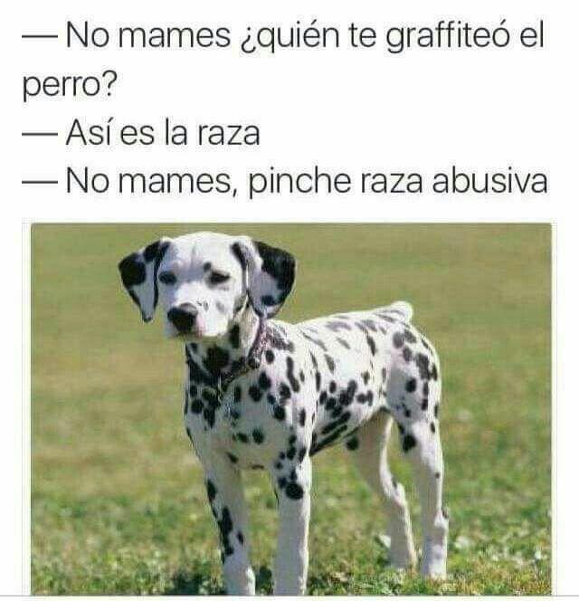 Asi Es La Raza Perros Dibujos De Perros Animales Bebes